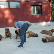 25 Jahre Bordeaux Doggen Klub Treffen
